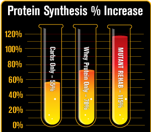chart_proteinsynthesispercentincrease_333333