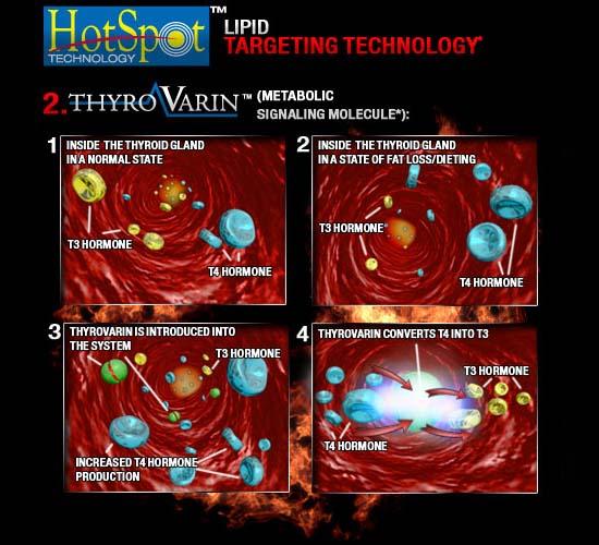 rcs-hotspot-thyrovarin_999999999999999